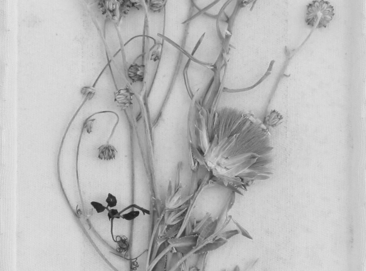 Herbarium, 10 X 20 cm