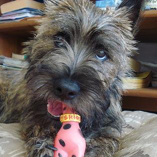 adoption chien en Loire Atlantique 44