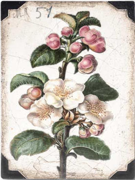 T462 Apple Blossom
