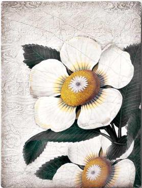T487 White Blossom