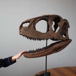 Skull cast of a theropod dinosaur