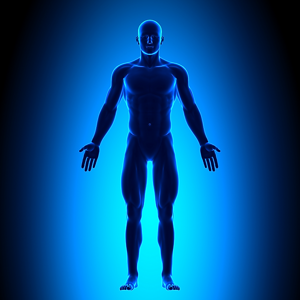Human male body image x750.png