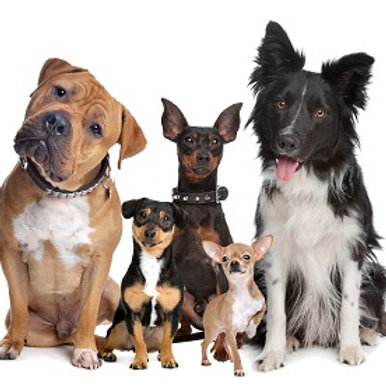 Canine Health Report (HPP)