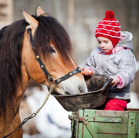 horse feeding.png
