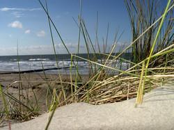 dune-grass-003-1533713-1600x1200.jpg