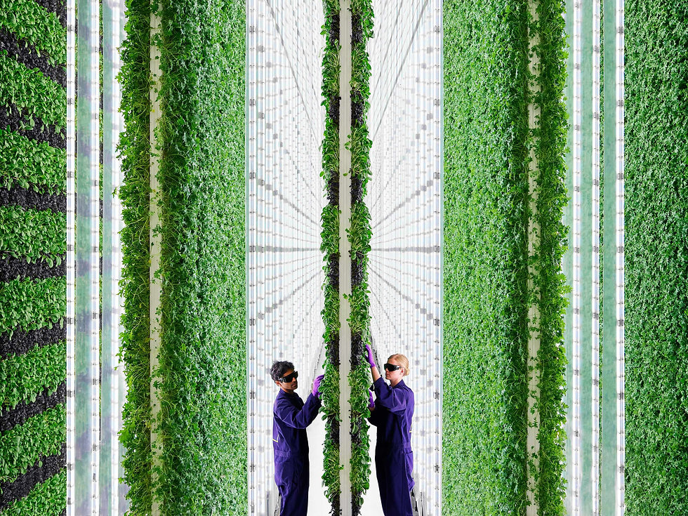 Vertical Farming photo.jpg