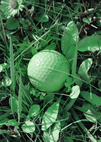 nature-ton-sur-ton-vert