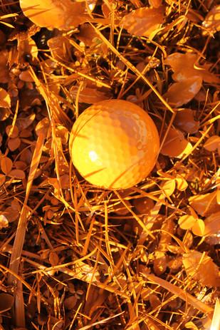 orange golf nature