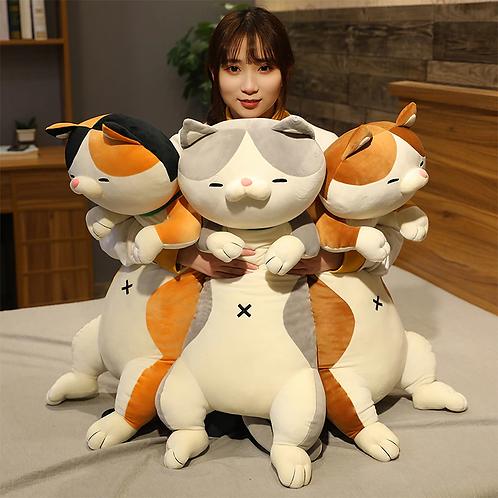 Cuddle Buddies; Cats & Dogs