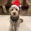 Thumbnail: Animal Santa Hat
