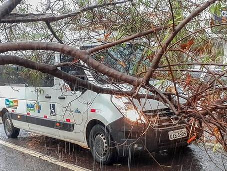 Veículo da saúde de São Gabriel é danificado por queda de árvore em Campo Grande