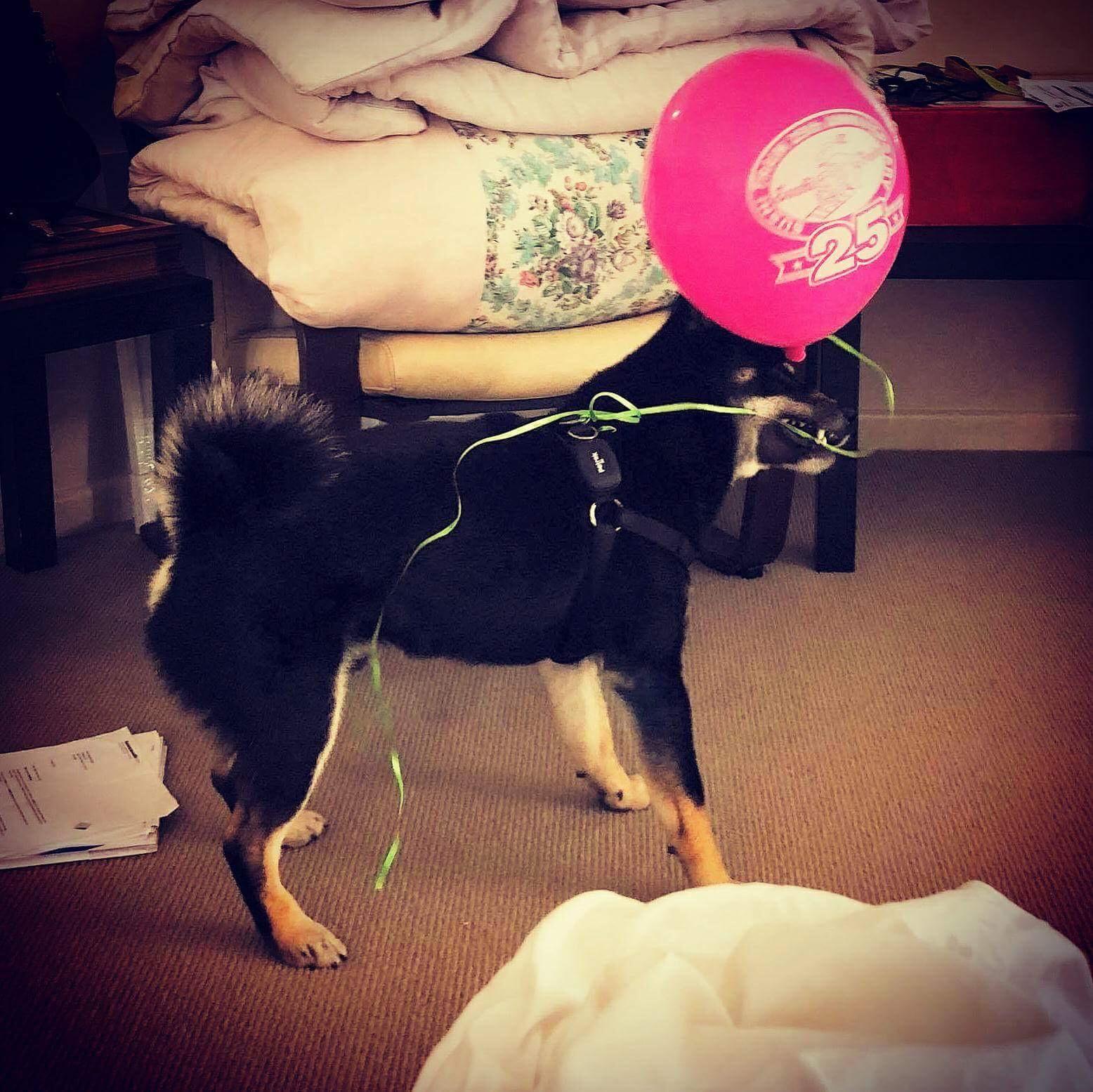 Kuro loves balloons