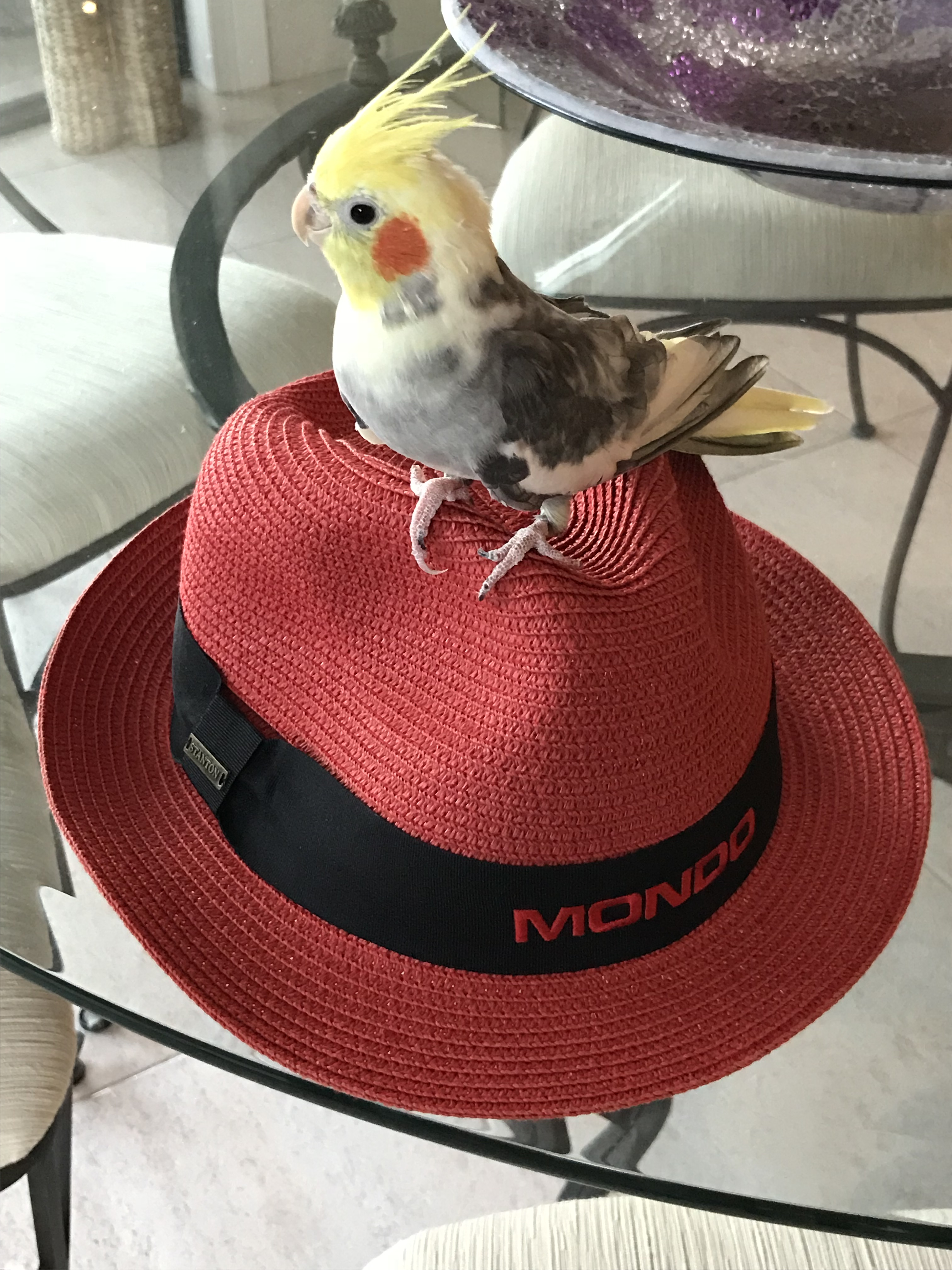 Sam chilling on the Mondo hat