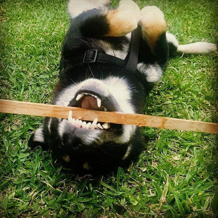 Kuro playing around