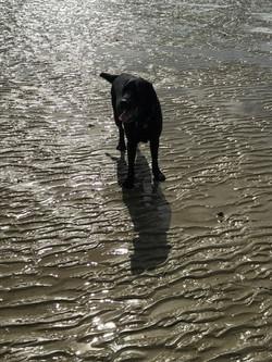 Charles Barkley on the beach