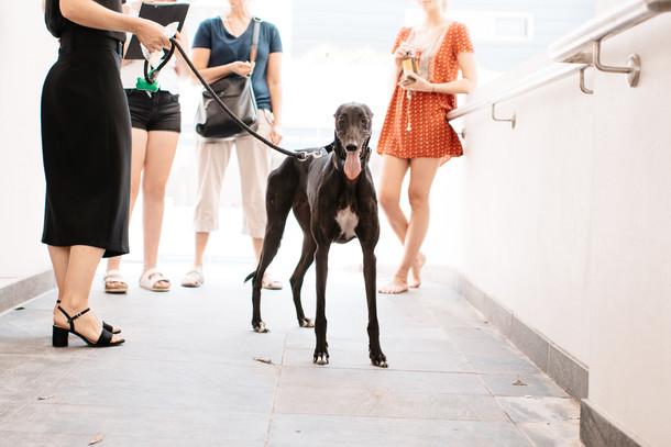 grey hound-5550.jpg