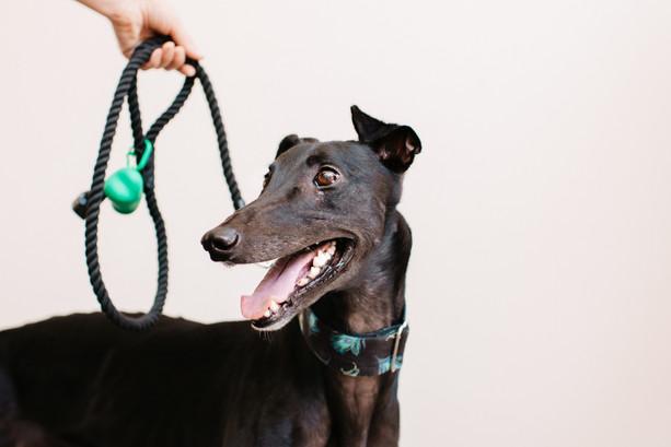 grey hound-5520.jpg