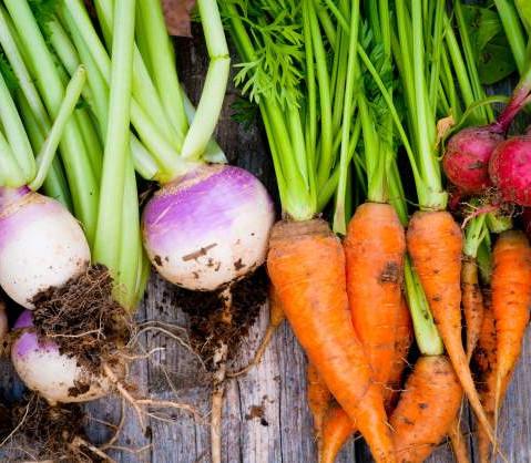 Farm to Fork Fresh Eats