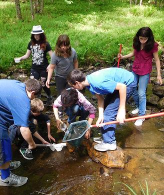 stream study, kids with nets in creek