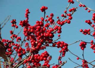 Persistent Berries