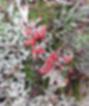 lichen on Unity Mountain