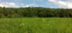 farm cover crops, feild