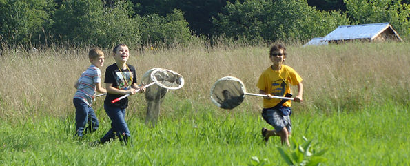 catching monarchs, kids, citizen science, monarch watch