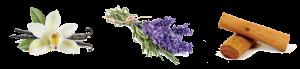 scent-og-300x69.png
