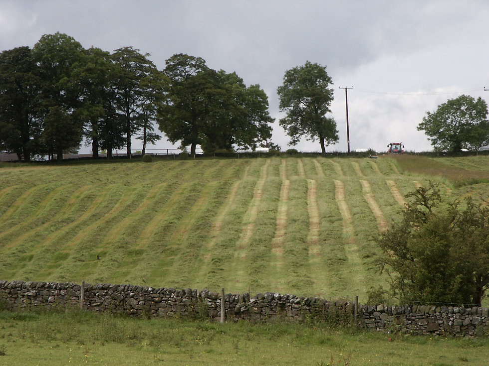 Silage Stripes.jpg