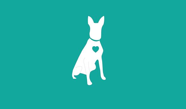 Dog Walker Edinburgh