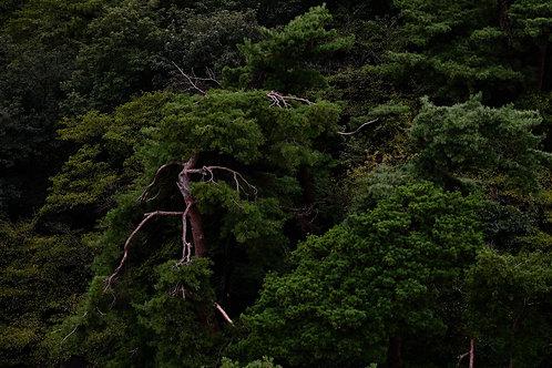 Lighting tree - Japan (Digital art)