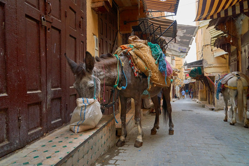Typical transport in streets of Fez