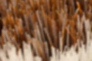Extreme macro image of brush