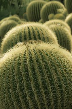 Cactus planets
