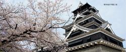 熊本城桜.jpg