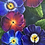 Thumbnail: Spring's Arrival (Pansy)