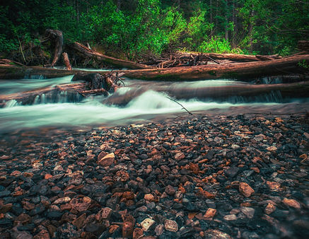 water in a forest