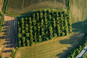Aerial View of Orchard