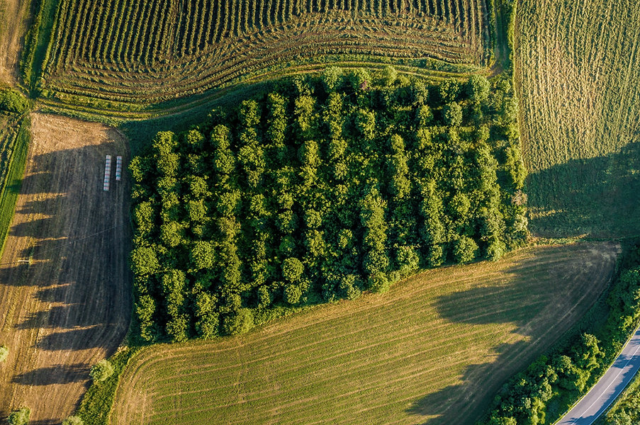 Luftbild von Obstgarten