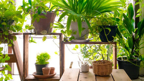 Copy of 7 Indoor Plants That Can Actually Purify the Air in Your Home