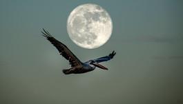 IMG_7596With Moon.JPG