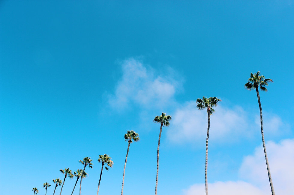 Tall Palms Bly Sky Copyright Garrett Chace