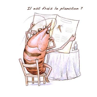 dessin crevette, Luc Favreau