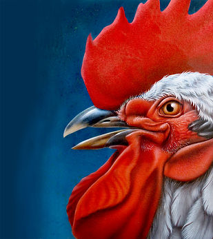 Illustration coq, coq, Luc Favreau