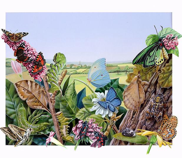 illustation papillons, Luc Favreau