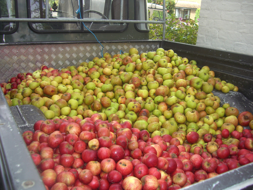 Pick up apples