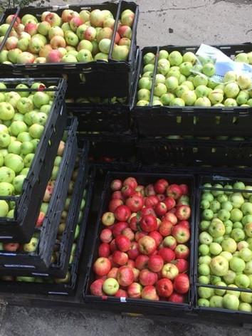 Apples in crates