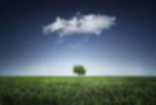 tree-736887_1280.webp
