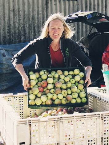 Gayle assisting with unloading apples