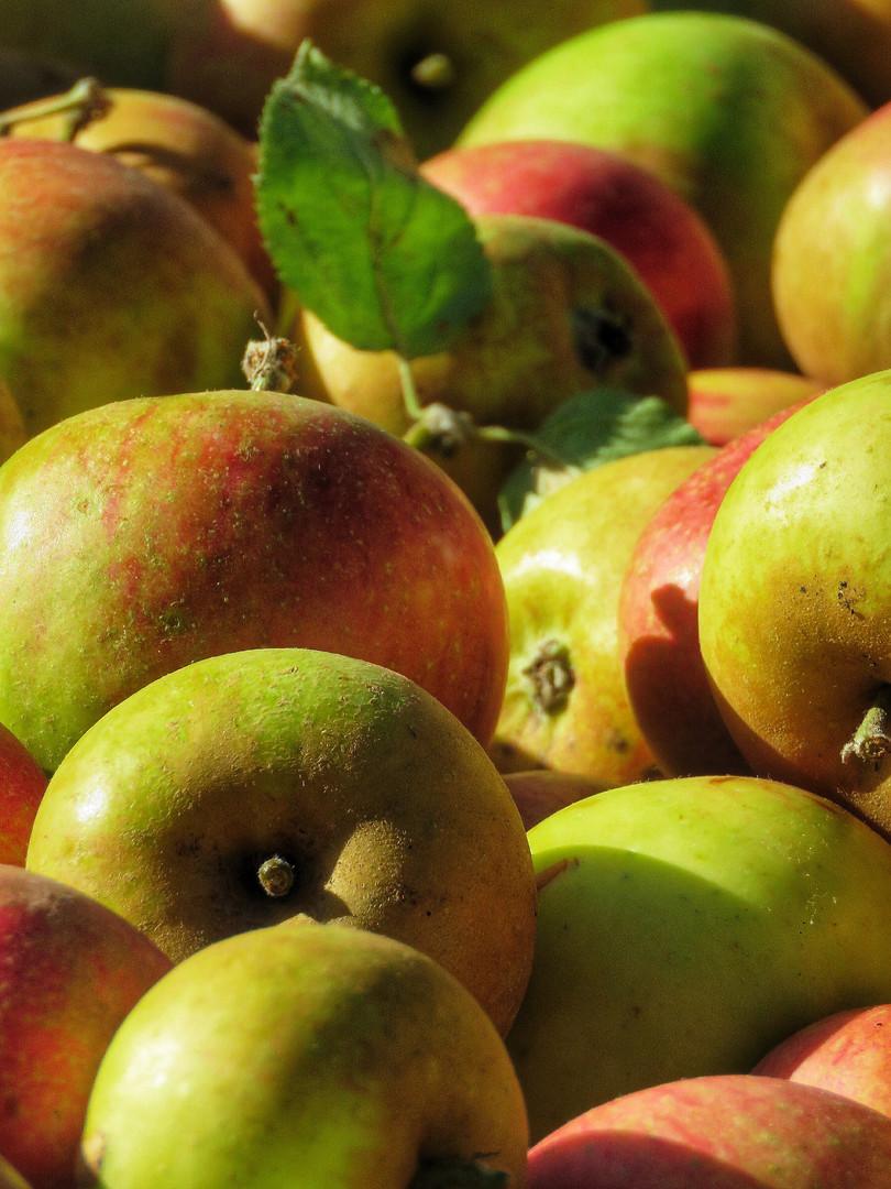 Cox apples